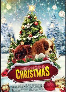 Cún Con Cho Giáng Sinh