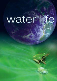 Cuộc Sống Dưới Nước