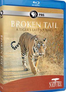 Broken Tail: Hành Trình Cuối Cùng Của Hổ