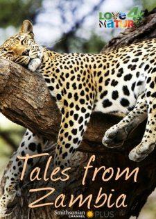 Những Câu Chuyện Từ Zambia