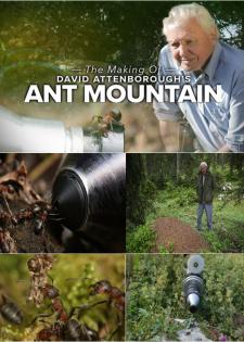 David Attenborough Và Đế Chế Của Kiến