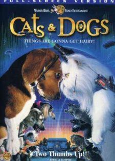 Đại Chiến Chó Mèo | Mèo Và Chó | Cuộc Chiến Chó Mèo