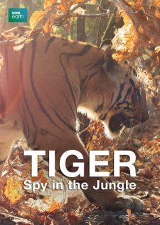 Loài Hổ Gián Điệp Trong Rừng: Phần 1