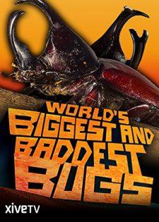 Thế Giới Các Loài Côn Trùng Khổng Lồ và Nguy Hiểm