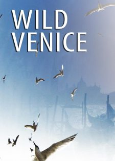 Thiên Nhiên Hoang Dã Venice